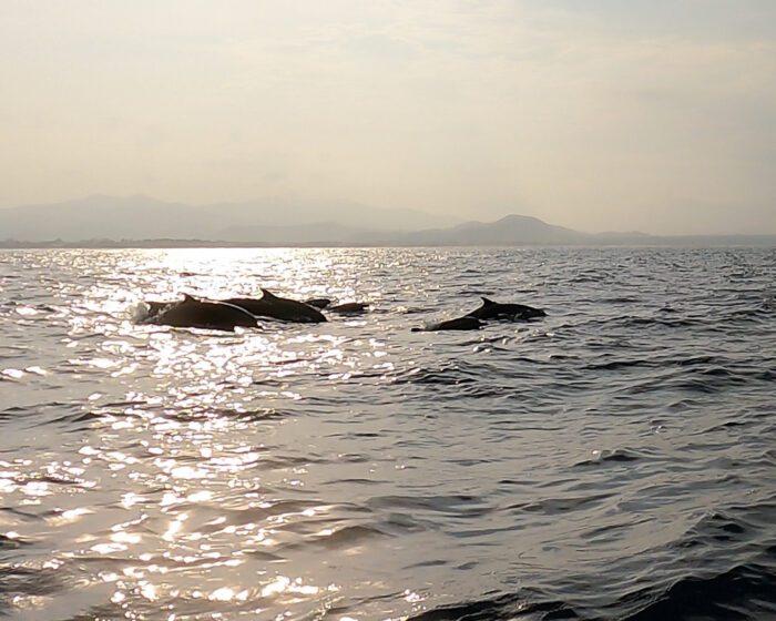 Dolphins in Puerto Escondido